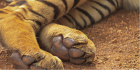 New Zealand's Illegal Wildlife Trade