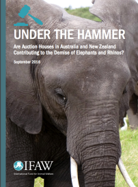 The Ivory and Rhino Horn trade in New Zealand and Australia