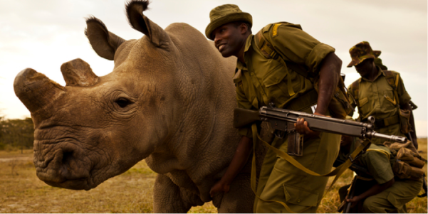 Rhino Trade Article.png