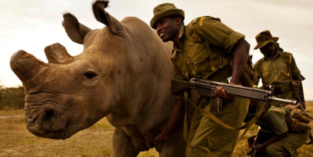 Rhino Trade Article