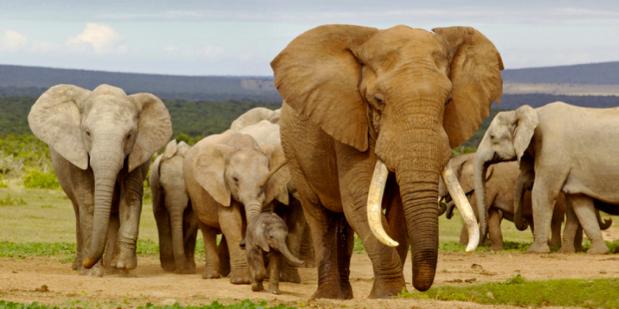 Urgent antipoaching deal